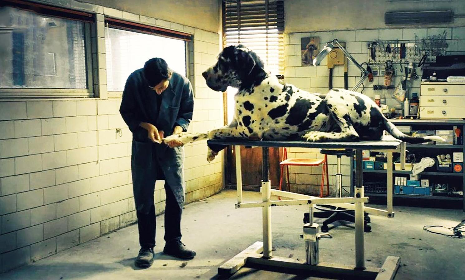 معرفی فیلم Dogman: تصویری هولناک از جنایت و زندگی در حومه رم