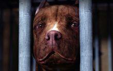 سرگذشت دردناک سگی مهربان در فیلم درام و غمانگیز Chance