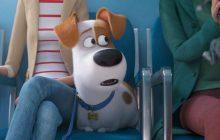 نمایش جنبه احساسی حیوانات خانگی، در قسمت دوم انیمیشن The Secret Life of Pets