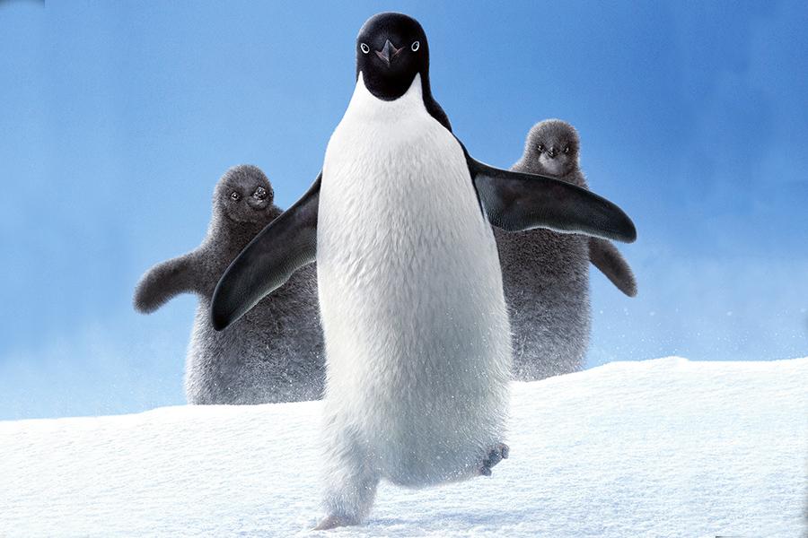 ماجرای پنگوئنی دوستداشتنی به نام استیو، در جدیدترین مستند دیزنینیچر،Penguins