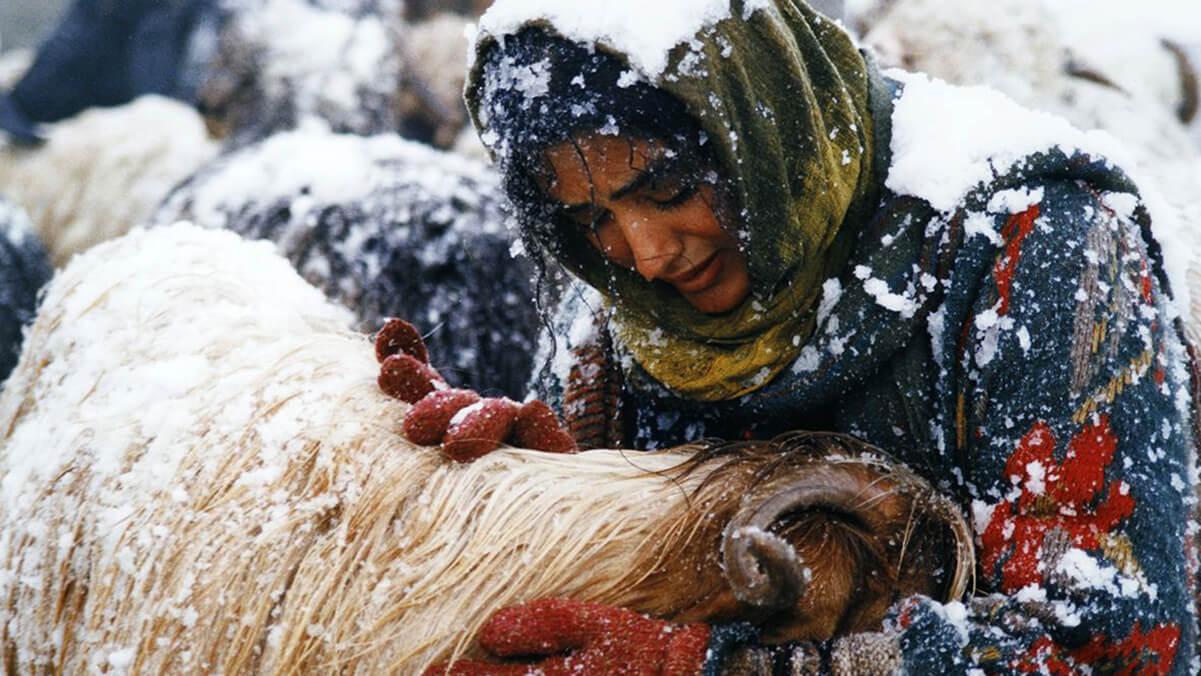 پیشنهادهایی از سینمای ایران در قرنطینه – گشت و گذار در تاریخ سینما